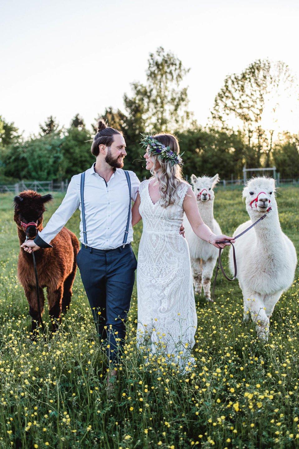 Alpaka Hochzeit, Brautpaar mit drei Alpakas auf der Wiese