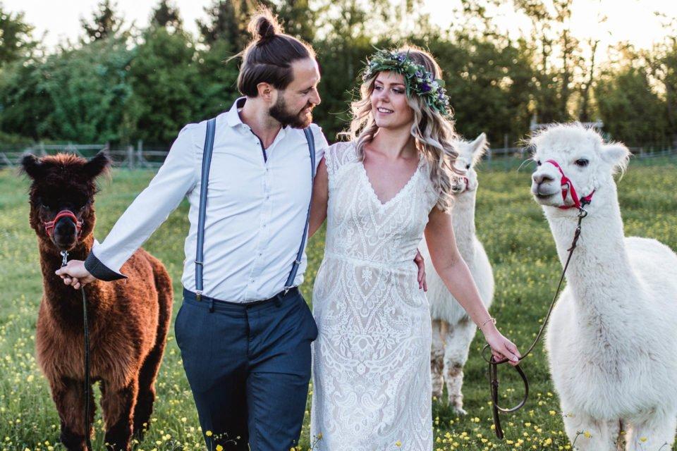 Alpakas zur Hochzeit mit Brautpaar auf der Wiese
