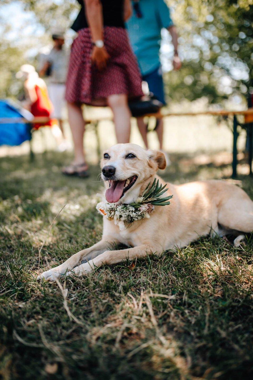 Hund auf der Wiese bei Hochzeit unter freiem Himmel