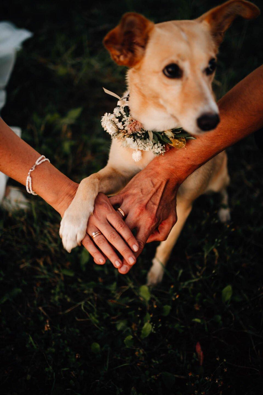 Hund mit Blumenschmuck am Hals bei Hochzeit